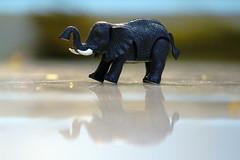 Reflection (kishorsharwesh.kk) Tags: home photography reflection chennai house elephant golden point photo kishorhsharwesh kishor kishorsharwesh