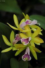 DSCF0599 (Patrick Mouret) Tags: fujixt2 fujinonxf80mmf28rlmoiswrmacro fleurs flowers plantes plants