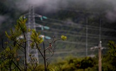 A Birds' View (Rod Waddington) Tags: china chinese yunnan power lines bird view mountains poles