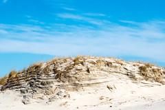 Sunny Day Dunes (wanderlust octopus) Tags: 2019 conservation dunegrass dunepreservation dunes environment february islandbeachstatepark jerseybeach jerseyshore naturalhabits newjersey parks winter beach
