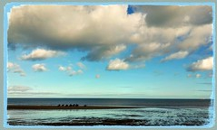 Sea Horses (liss.cook) Tags: horse cloud