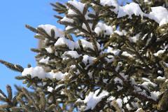 Snow Photos-17
