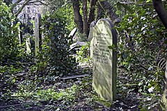 General Cemetery (brianarchie65) Tags: generalcemetery cemeteries graves grave hull brianarchie65 geotagged trees bushes kingstonuponhull springbankwest eastyorkshire cityofculture flickrunofficial flickr flickruk flickrcentral flickrinternational ukflickr unlimitedphotos ngc undergrowth canoneos600d
