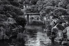 Nijo garden (Tim Ravenscroft) Tags: nijo garden lake refelections pine castle kyoto japan hasselblad hasselbladx1d monochrome blackandwhite blackwhite