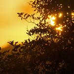 sunrise - Riverside Valley Park, Exeter, Devon - Sept 2018 thumbnail