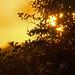 sunrise - Riverside Valley Park, Exeter, Devon - Sept 2018