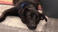 KEIN PROBLEM WENN LUCY ZU BESUCH IST (rentmam1) Tags: dog hund