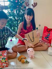 Brown Bear and Oinky Boo returns (Stinkee Beek) Tags: christmas erin ethan