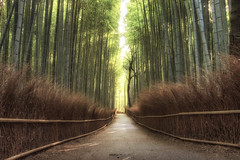 Arashiyama Bamboo Grove - Kyoto (Japan) (Andrea Moscato) Tags: andreamoscato giappone japan asia japanese 日本 nihon nippon asian light luce green shadow ombre prefecture attraction ombra site national nature natura natural naturale landscape paesaggio day sun sunshine white sky cielo view vivid vista scenic parco park trees history historic ancient treasure wood art giardino branch kyōto tree silhouette path pathway street strada road walk walkway fence leaves legno forest bosco perspective tourist brown sand sagano alberi bamboo aoi elitegalleryaoi bestcapturesaoi