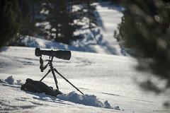 L'attente (Samuel Raison) Tags: vercors hautsplateauxduvercors montagne neige mountain photographie photo nikkor téléobjectif nikon nikon4600mmafsgvr nikon2870200mmafsvr nikond800 tripod trépied gitzo