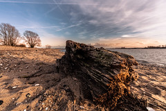 driftwood (bjdewagenaar) Tags: photography photograph photographer photooftheday sony sonyalpha sonyphotographer sonyimages sonya sonya7riii sonygm sonygmaster wide wideangle mirrorless fullframe beach water river nature trees sky clouds landscape landscapephotography holland dutch raw lightroom