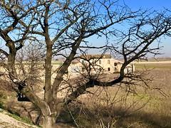 iph8251 (gzammarchi) Tags: italia paesaggio natura pianura ravenna santalberto casa albero ciliegio cornice