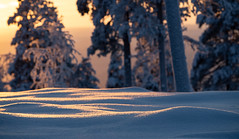 Morning Orange (MrBlackSun) Tags: scenery landscape kuusamo nature photography wildlife bird birds birdlife birdlover birdwatcher nikon d850 finland