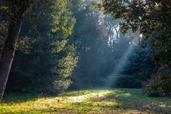 Ray of light (Stefano Argentieri) Tags: luce light bosco sun sole alberi trees verde green forest canon eos ef24105iil 6dmkii ray raggio