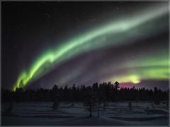 Aurora borealis_93025 (uwe_cani) Tags: polarlicht nordlicht aurora auroraborealis nothernlights panasonic g9 finnland finland skandinavien scandinavia lappland lapland ylläs winter schnee snow natur nature outdoor landschaft landscape bäume trees nacht night sterne stars grün green grünesleuchten grüneslicht