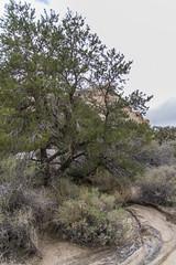 DAK_9283r (crobart) Tags: hidden valley hiking trail joshua tree national park california