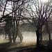 early morning mist - Cullompton Leat Fields, Cullompton, Devon - Dec 2018