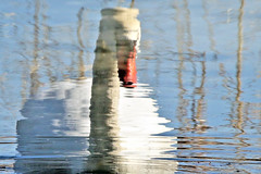 The Swan's Dream (Jan Nagalski) Tags: nature wildlife spring swam muteswan reflection impressionist pond marsh swamp rippledwater water blue white dream dreamlike lakestclair southeastmichigan michigan jannagalski jannagal lone lonely alone mate mating abstract