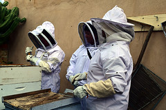 DSC_9757-61 (jjldickinson) Tags: nikond3300 107d3300 nikon1855mmf3556gvriiafsdxnikkor promaster52mmdigitalhdprotectionfilter longbeach bixbyknolls longbeachbeekeepers outreach class beeprepared insect bee honeybee apismellifera hive hiveinspection