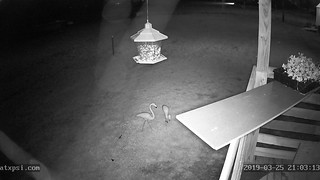 (Roberts Texas Bird Feeder Cam Profile Picture