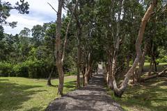 Road to Alexandra Falls / Дорога на водопад Александра (dmilokt) Tags: природа nature пейзаж landscape река river водопад waterfall dmilokt
