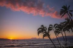 The magical final light of the day on Maui. (Freshairphotography by Janis Morrison) Tags: maui mauihawaii ilovemaui hawaii hawaiian sunset palmtrees pacificocean amazing coast colorful light naturesart nature spectacular science