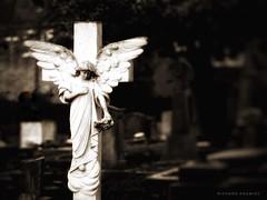 Angel at St Peter's Church, Littleover (RichardK2018) Tags: grim grey dark olympusem1mk2 vignette snapseededit zuiko75mmf18 cemetery graveyard angel