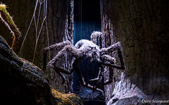 The Scary Spider (daveseargeant) Tags: spider harry potter world leavesden studio warner brothers bros nikon df 50mm 18g low light web fantasy creature