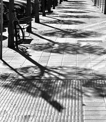 Quién dice que la soledad no nos enseña nada, es porque nunca la conoció en su totalidad, ella nos enseña lo horrible que somos, y nos conduce a la superación. La soledad está más allá de toda compañía. Solo hay que saber mirar.... (elena m.d.) Tags: new monocromo street guadalajara nikon d5600 sigma sigma105