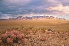 Emigrant Pass 2501 A (jim.choate59) Tags: jchoate on1pics desert cactus emigrantpass mountains oldspanishtrail deathvalley nopahmountians