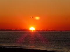 Primer amanecer 2019 (10) (calafellvalo) Tags: amaneceralbasolcalafellseaalbadasunrise amanecer sunrise amanecerdelaño2019 alba albada sea mar calafellvalo contraluz calafell aves gaviotas