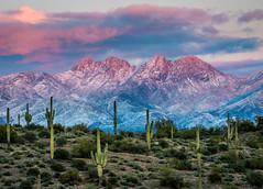 Four Peaks Snow (blue5011b) Tags: fourpeaks cactus snow winter desert arizona southwest saguaro wilderness clouds pink sky landscape nikon d810 80200mm