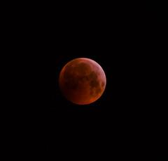Totale Mondfinsternis 01/2019 Wien (Frostograph) Tags: moon lunar totallunareclipse nikon d5600 mondfinsternis bloodmoon supermoon