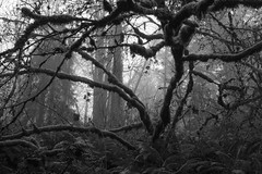 Foggy Forest Park B&W (kephart_kyle) Tags: 2019 foggy fog foliage forest hike january mist moss northwest nw oregon pacific park pnw portland rainforest winter