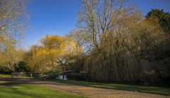 a bench by a bridge by a river (Redheadwondering) Tags: sonyα7ii mottisfont hampshire nationaltrust tokina2035mmlens tokina gardens river rivertest bench bridge willows trees