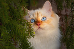 Framed by the green (FocusPocus Photography) Tags: tofu dragon katze kater cat chat gato tier animal haustier pet baum tree versteck hideout