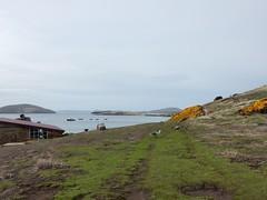 New Island, Falkland Islands (Mulligan Stu) Tags: newisland falklandislands