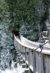 Other Side of the Hanging Bridge (Bill Smith1) Tags: agfavista200 believeinfilm billsmithsphotography caledon2019 heyfsc nikkorai50f14lens nikonfm