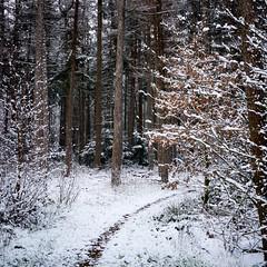 a path in the forest (Jos Mecklenfeld) Tags: winter snow schnee sneeuw forest wald bos nature natur natuur nulbos westerwolde sonya6000 sonyilce6000 selp1650 sonyepz1650mm niederlande nederland terapel groningen netherlands nl