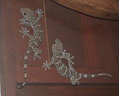 Tokay Geckos, Langkawi, Malaysia (davidpetergibbins) Tags: tokay geckos gecko lizard lizards