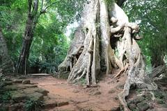 Angkor_Phimeanakas_2014_11