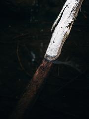 Rajapinta (Olli Tasso) Tags: birgitanpolku birgittatrail tree puu tukki vesiraja vesi water snow lumi virta stream joki puro lempäälä finland outdoors nature luonto ulkoilu retkeily luontokuva pirkanmaa