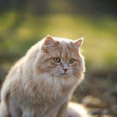 cat (joB-7) Tags: cat sony a7 85mm