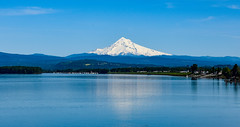Mount Hood and Columbia River (maytag97) Tags: mounthood oregon usa america maytag97 nikon d750 columbia river mountain landscape waterway blue sky scenic tourism pano panorama hood mt mount water beautiful travel northwest nature range beauty trees pacific white image panoramic view north peak cascade united states west