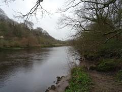 Drizzly Dart (Phil Gayton) Tags: water tree sky cloud drizzle river dart totnes devon uk grass reed