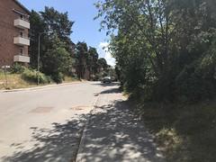 20180710-C (Heinrock) Tags: animal bromma instagram iphone7 stockholm street summer sunshine sweden deer abrahamsberg