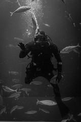Aquanaut (Sir_Francis_Barney) Tags: denmark dänemark hirtshals