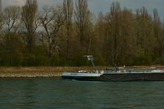 TMS VIDI (Lutz Blohm) Tags: tmsvidi tankschiff rheinschifffahrt rhein binnenschifffahrt binnenschiffe kollerfähre rheinfährebrühl rheinkilometer409 sonyfe24105mmf4goss sonyalpha7aiii rheinzutal gütermotorschiff