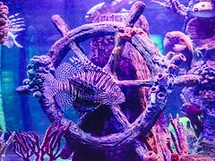 DSC_2678.jpg (IT_Ninja) Tags: fish urbex animals construction aquarium