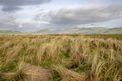 Reeds (Howie Mudge LRPS BPE1*) Tags: reeds hills mountains sky landscape nature ngc nationalgeographic gwynedd wales cymru uk travel adventure overcast clouds microfourthirds mft m43